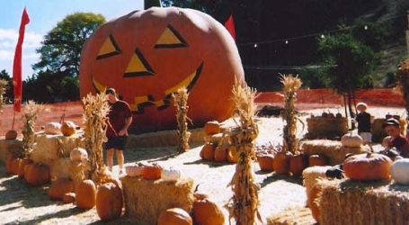 Thieves Target San Ramon Pumpkin Patch Hours Before Halloween