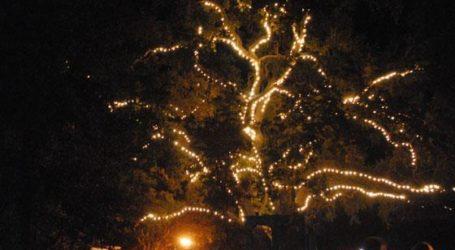 Danville Tree Lighting Set for Friday November 25th