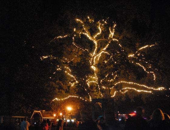 danville tree lighting set for friday november 25th danville san